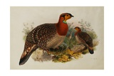 Blyths Horned Pheasant Giclee Print by Joseph Wolf
