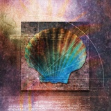 Colorful Clam Shell and Geometry Photographic Print by Colin Anderson