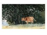 Cow in Pasture Giclee Print by Winslow Homer