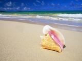 Conch Shell on Beach Fotografisk tryk af Randy Faris