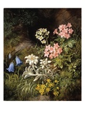 Edelweiss and Other Alpine Flowers Giclee Print by Theodor Petter