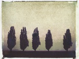 Five Poplars Photographic Print by Jennifer Kennard