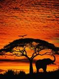 Elefant unter einem breiten Baum Fotodruck von Jim Zuckerman