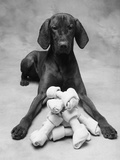 Dog with Pile of Bones Photographic Print by Lawrence Manning