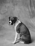 Dog Looking to Side Photographic Print by Lawrence Manning