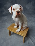 Dog Sitting on Bench Photographic Print by Lawrence Manning
