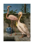 Flamingo and Pelican Giclee Print by Henry Stacy Marks