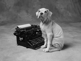 Dog Sitting at Typewriter Photographic Print by Lawrence Manning
