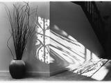 Gower Road Shadows Photographic Print by Kim M. Koza