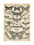 Ilustración de mariposas y polillas Lámina giclée