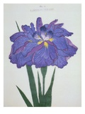 Kamiyo-No Mukashi Book of a Blue and Purple Iris Giclee Print by  Stapleton Collection