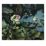Lotus Collage Giclee Print by Robert McIntosh