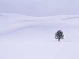 Lodgepole Pine in Snow Photographic Print by George Lepp