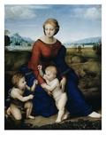 Madonna of the Meadow Reproduction procédé giclée par  Raphael