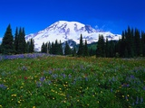 Meadow near Mount Rainier Photographic Print by Rick Morley