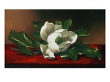 Magnolia Giclee Print by Martin Johnson Heade