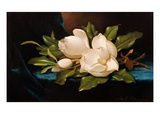 Giant Magnolias on Blue Cloth Giclee Print by Martin Johnson Heade