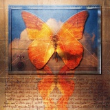 Overlaying Butterflies and Text Photographic Print by Colin Anderson
