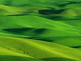 Palouse Hills Photographic Print by Darrell Gulin