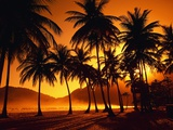 Palm Trees at Beach Fotoprint van Jack Hollingsworth