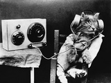 Pet Radio Photographic Print