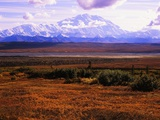 Red Vegetation and Mount McKinley Photographic Print by Robert Glusic