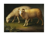 Ram and Sheep Giclee Print by Peter Wenzel