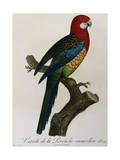 Variety of Multicolored Parrot by Jacques Barraband Giclee Print