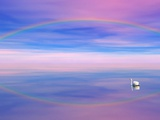 Rainbow Reflecting over Swan Photographic Print by Cindy Kassab