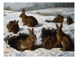 Rabbits in the Snow Giclee Print by W. Luker