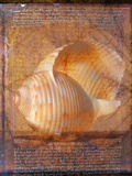 Seashell and Handwriting Photographic Print by Colin Anderson