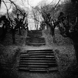 Run-Down Stairway Among Leafless Cherry Trees Photographic Print by Annette Fournet
