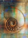 Colin Anderson - Seashell and Handwriting Fotografická reprodukce
