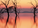 Silhouetted Trees in Salton Sea Photographic Print by Richard Cummins