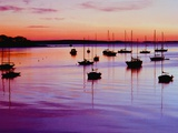 Sailboats Anchored in a Harbor Photographic Print by Cindy Kassab
