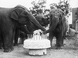 Ruth the Elephant Celebrating Her Birthday Photographic Print