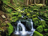 River Winding Between Mossy Rocks Photographic Print by Robert Glusic