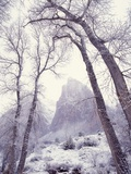Snow at Zion National Park Photographic Print by Jim Zuckerman