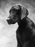 Solemn Dog Photographic Print by Lawrence Manning