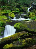 Stream Cascading Down Moss-Covered Rocks Photographic Print by Robert Marien