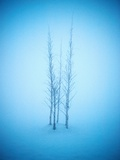 Stand of Trees in the Snow Fotografisk tryk af Richard Gross