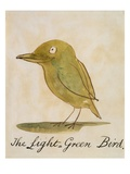 Hellgrüner Vogel Giclée-Druck von Edward Lear