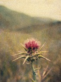 Thistle No.2 Photographic Print by Jennifer Kennard
