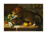 The Collared Thief Giclee Print by William J. Webbe