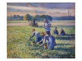 The Pea Harvest Giclee Print by Camille Pissarro