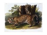 The Jaguar Giclee Print by John James Audubon