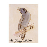 The Gray Bird Giclee Print by Edward Lear