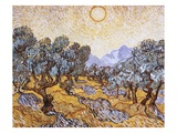 The Olive Trees Premium Giclee Print by Vincent van Gogh