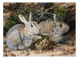 Two Rabbits Giclee Print by John Sherrin