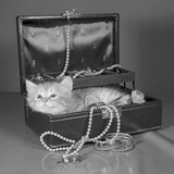 View of Kitten in Jewel Box Photographic Print by Philip Gendreau